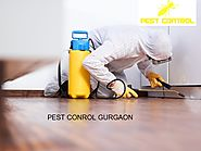 Tips on How to Keep the Termites and Pest Away – Pest Control 24X7