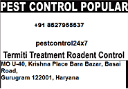 Effective Pest Treatment in Gurgaon