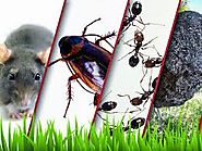 Pest Control in Gurgaon to save your assets – Pest Control 24X7
