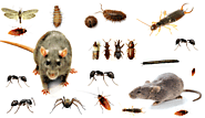 Our aim is the free environment from the termite in the Gurgaon area – Pest Control 24X7