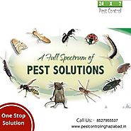 Call Us for Commercial and residential Pest Control service