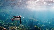 Fun Facts About Galapagos Penguins | Happy Gringo Travel Blog