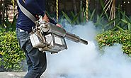 Effective Pest Treatment in East Delhi