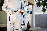 Safe And Effective Pest Control Services In East Delhi