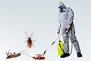 Choose The Best Pest Control Services In East Delhi