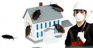 Great pest control tips