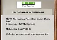 Get Best from pest control Service in Gurgaon