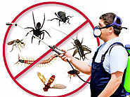 Crucial Questions You Should Ask The Pest Control Company – pest control gurugram