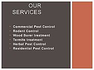 See Effective Result with Pest Control Service Gurgraon