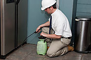 Avail ideal approaches from Pest Control Delhi to eradicate pests – pest control service