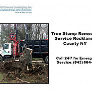 Tree Stump Removal Service Rockland County NY
