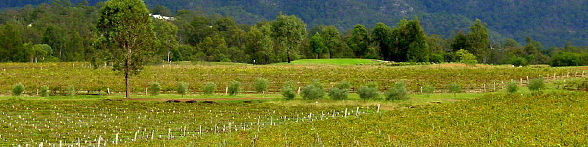 Headline for The Best Wineries in Hunter Valley – Relish the Flavours