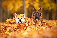 Fun Fall Activities For You and Your Dog – HPZ™ PET ROVER™
