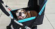 Pet Rover: Top Guidelines To Buy A Good Quality Stroller For Your Small Dog!