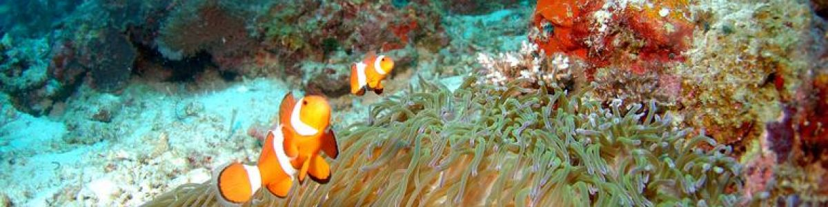 Headline for 05 Best Dive Spots in Bali for Adventure Seekers – Underwater Havens of Magic
