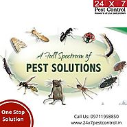 Pest Control Delhi-Most Effective & Odorless Services