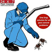 24x7pestcontrol - 24X7 Pest Control Services in Delhi NCR....