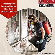 Why You Need an expert from Pest Control Gurgaon – 24x7pestcontrol