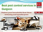 Best pest control services in gurgaon | edocr