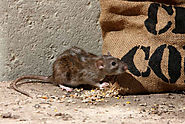 Services Of Professional Rat Control Atlanta