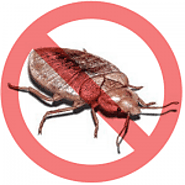 Certified Pest & Animal Control Services at Pestico