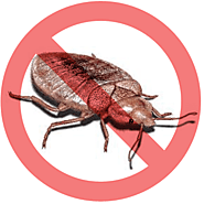 Pestico - Top Bed Bugs Control Services in Toronto