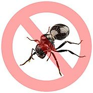 Pestico Offers Toronto's Environment Friendly Ant Control Services