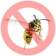 Effective Wasp Removal Services in Toronto - Pestico