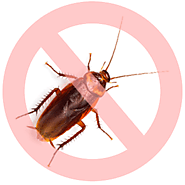 Best Cockroach Removal Services in Toronto - Pestico