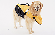 Why Your Dog Might Need a Life Preserver - BarkForce