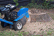 Differentiating Stump Grinding from Stump Removal
