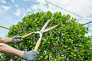 Are Tree Removal Services Something You Need?