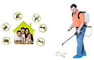 Assured way to deal pests via Termite Control South Delhi – pest control south delhi