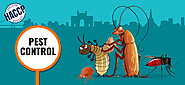 Choose The Best Pest Control Services In South Delhi