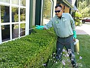 A few significant pest control tips in mind