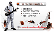 Professional Pest Control Services in South Delhi