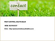 Choosing the best Pest Control Service – pest control south delhi