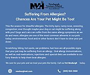 Suffering From Allergies - Chances Are Your Pet Might Be Too!
