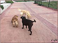 Take care of your dog with Dog Walkers in San Jose
