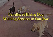 Take care of your dog with trained dog walkers