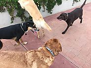 Socialize your dog with dog walkers in San Jose