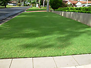 Characteristics of Couch Grass Sydney