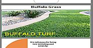 Award Turf Supplies – The Supplier Of The Best Turf Gras Sydney