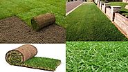 Buffalo Turf Features And What Are The Reasons Behind Its Popularity