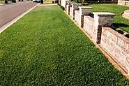 Important Features That You Should Know About Buffalo Grass Sydney