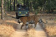 Pench Tiger Reserve Online Booking