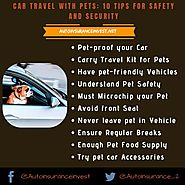 How to travel in car along with pets? | Auto Insurance Invest