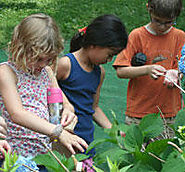 Website at https://www.massaudubon.org/get-outdoors/wildlife-sanctuaries/habitat/programs-classes-activities/schools-...