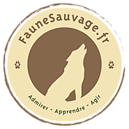 Applications - Faune Sauvage