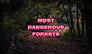 Most Dangerous Forests in the World (Deadliest & Haunted)
